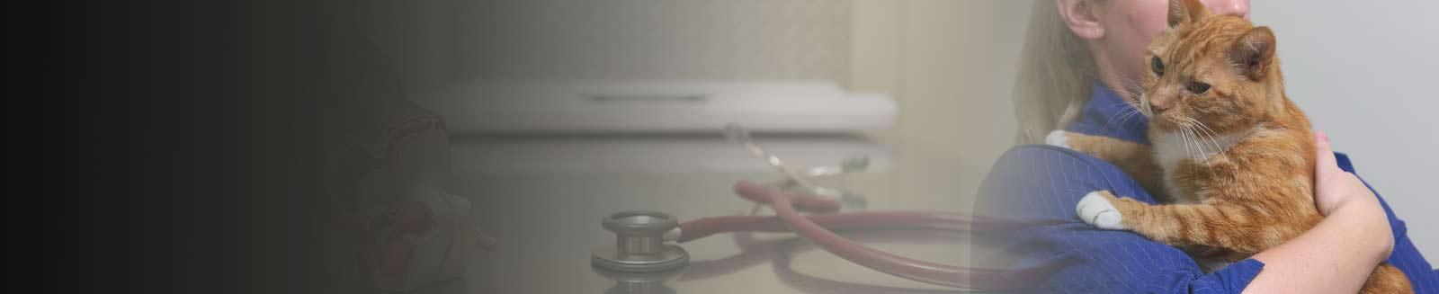pet surgical care melbourne