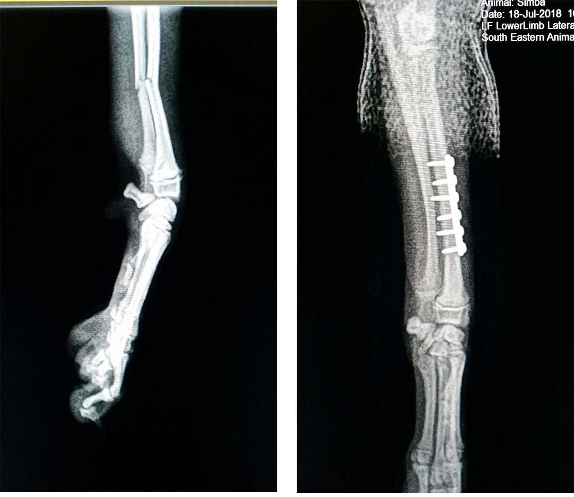 limb fractures in dogs