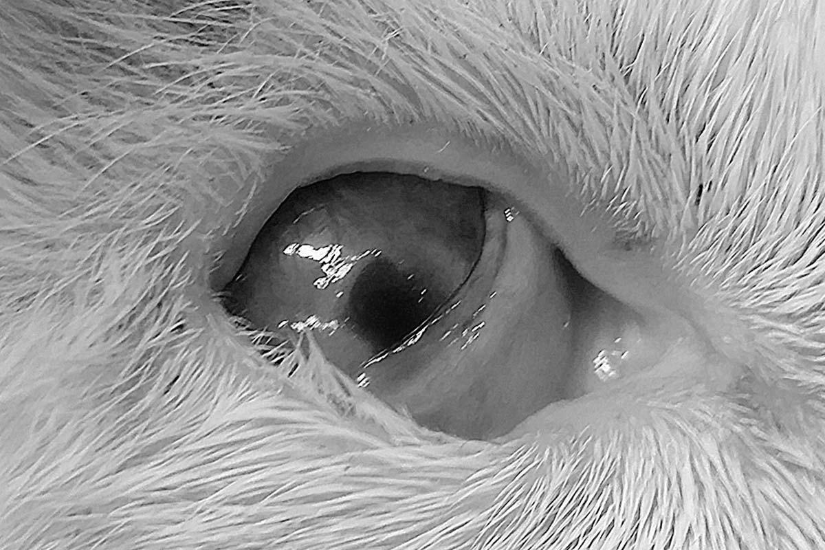 corneal ulcers
